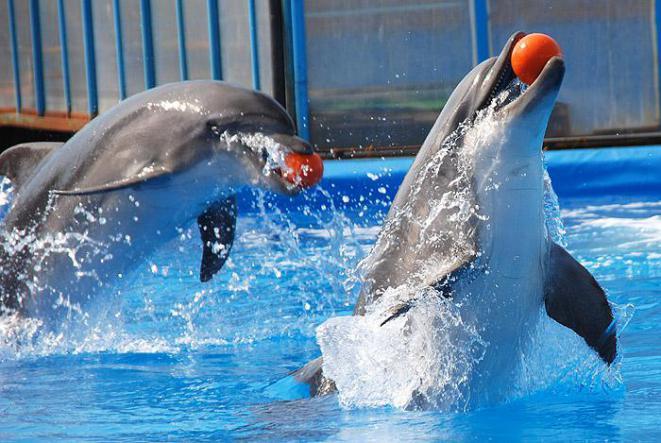 дельфинарий в курортном - Дельфинарий в посёлке Курортное