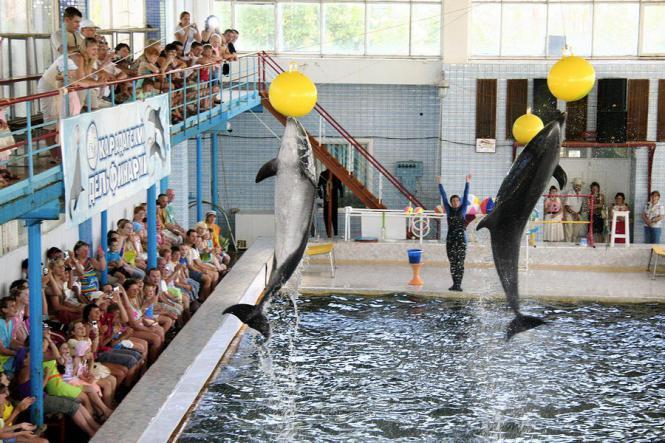 дельфинарий в крыму - Дельфинарий в посёлке Курортное