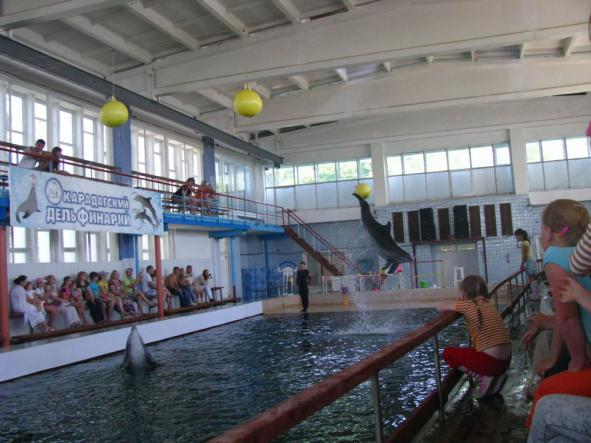 курортное дельфинарий - Дельфинарий в посёлке Курортное