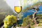 Крым и вино. - Винный тур по  Крыму  «In vino veritas»!